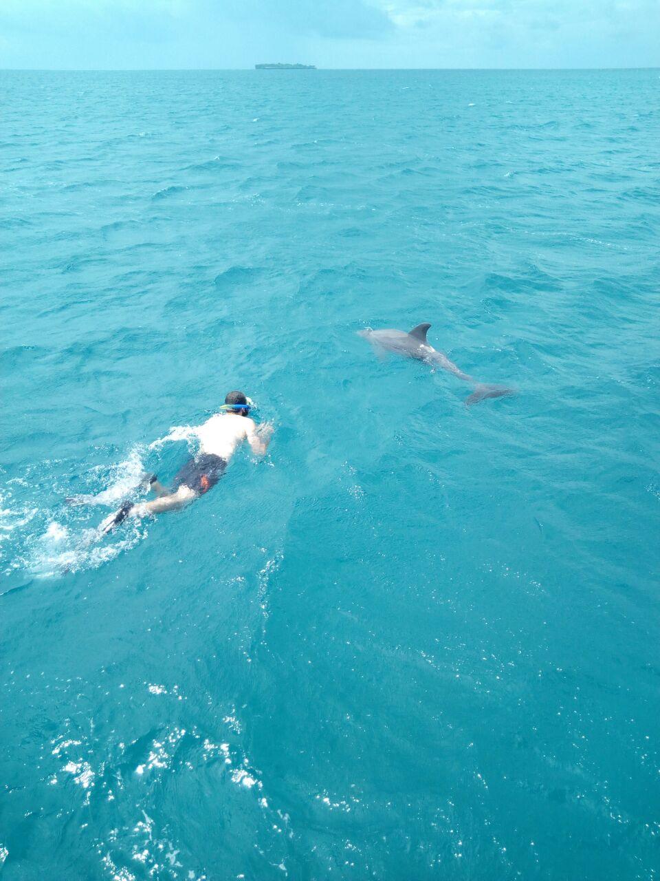 Tourist Snorkeling Along Dolphin