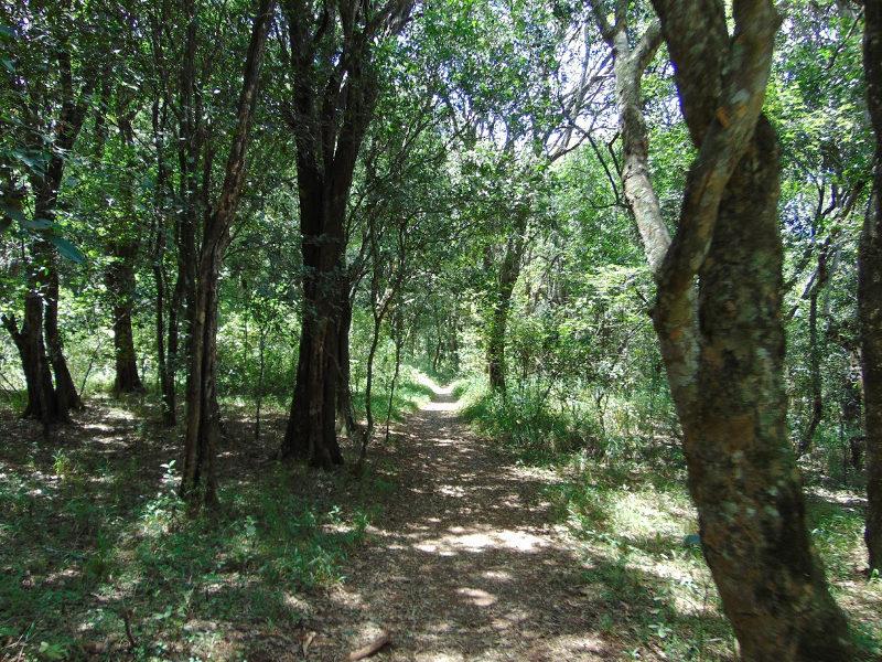 Nairobi Forest