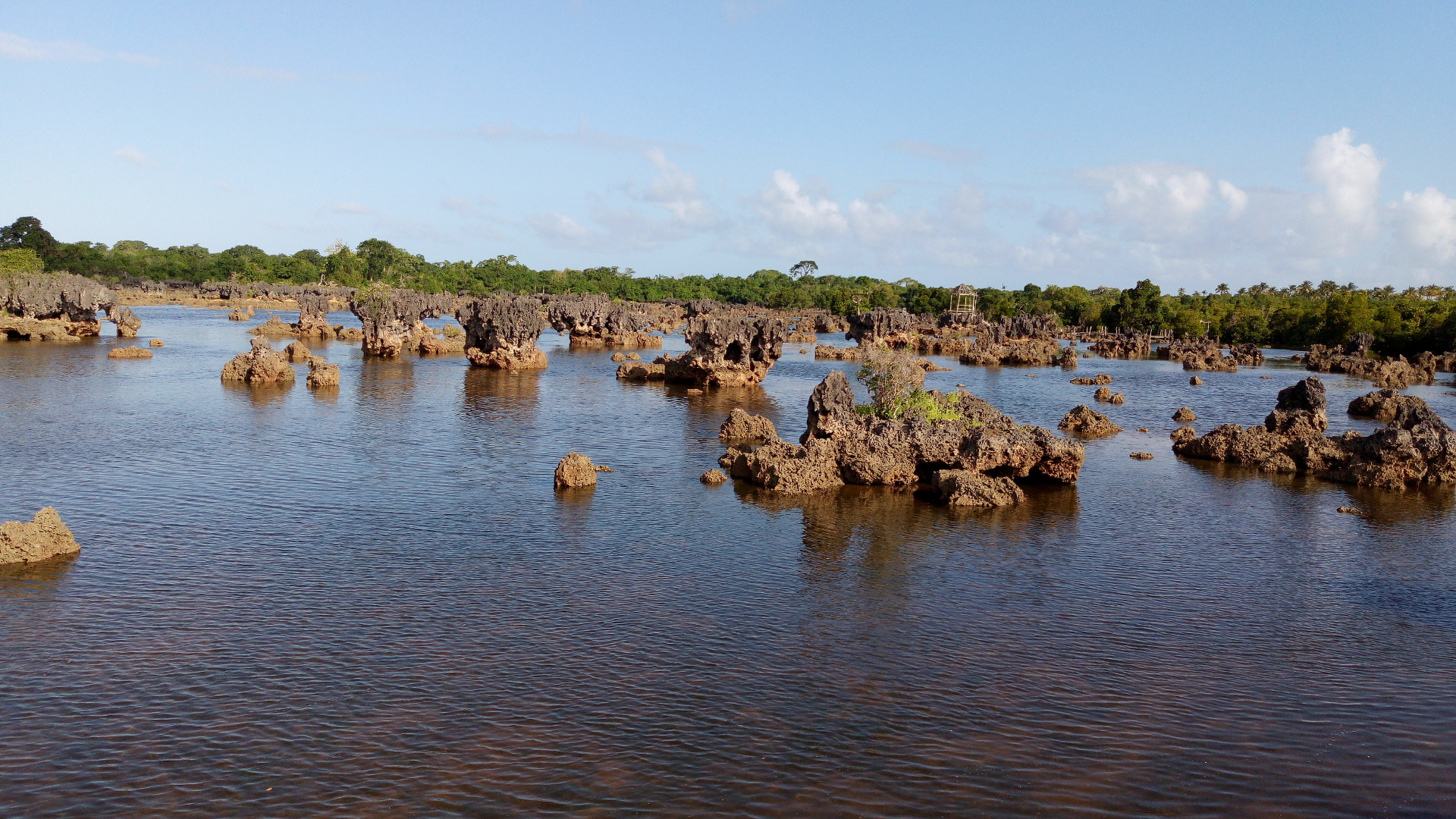 Beauty of Coral Gardens with Backdrop of Mangrove Forest